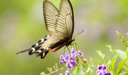 环保部启动蝴蝶监测 或可预警极端天气
