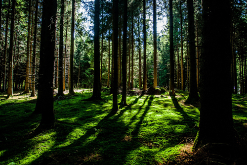 壁纸 风景 森林 桌面 500_333